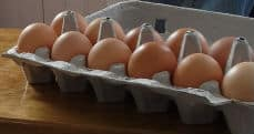 generic carton of eggs
